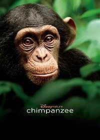 黑猩猩的世界